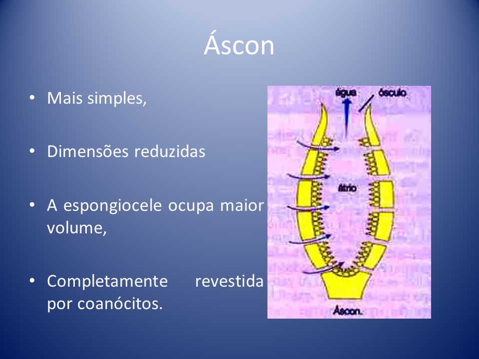 Áscon Mais simples, Dimensões reduzidas