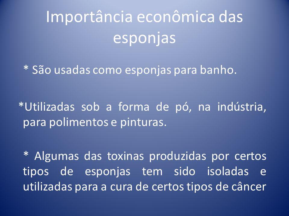Importância econômica das esponjas