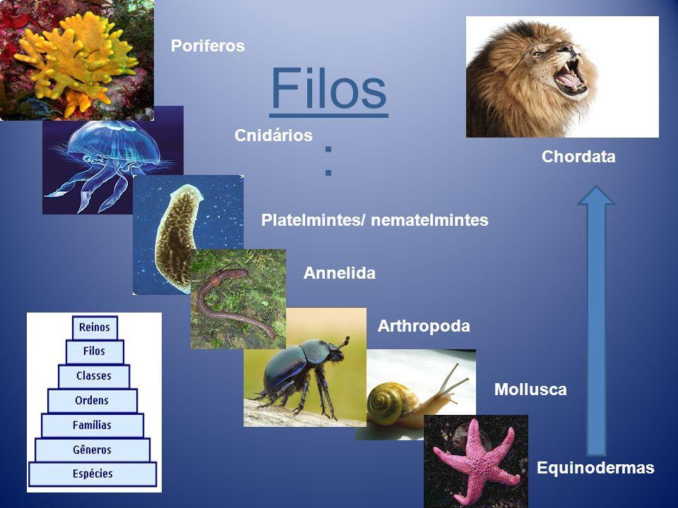 Filos: Poriferos Cnidários Chordata Platelmintes/ nematelmintes