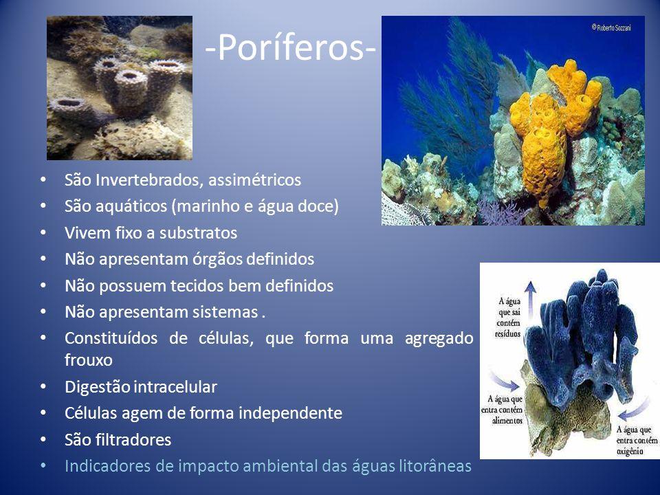 -Poríferos- São Invertebrados, assimétricos