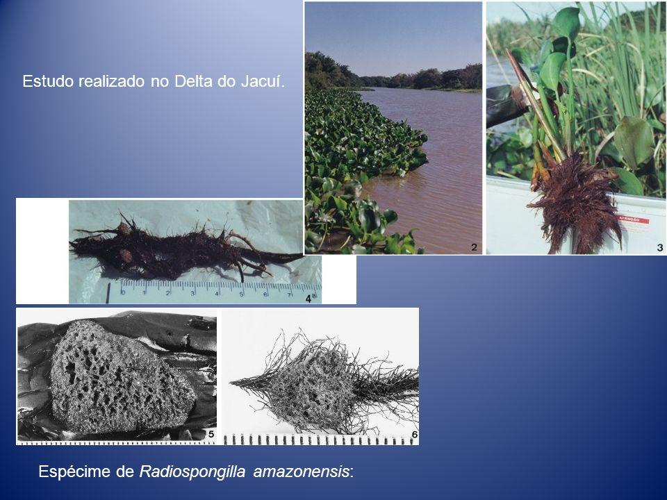 Estudo realizado no Delta do Jacuí.