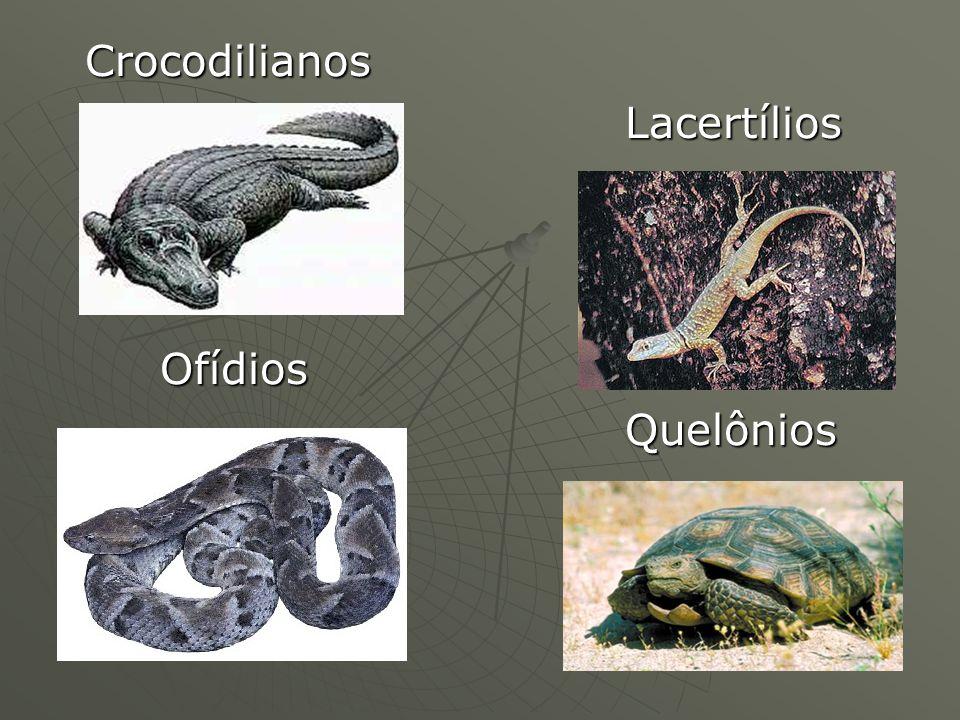 Crocodilianos Lacertílios Ofídios Quelônios