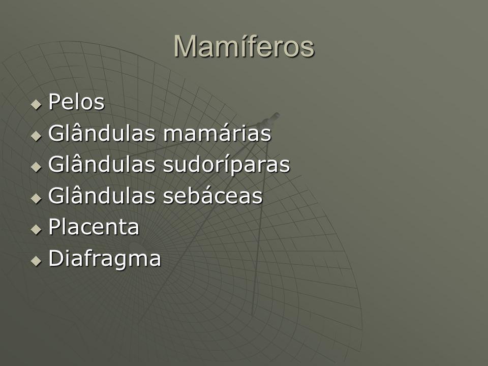 Mamíferos Pelos Glândulas mamárias Glândulas sudoríparas