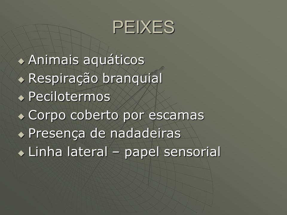 PEIXES Animais aquáticos Respiração branquial Pecilotermos