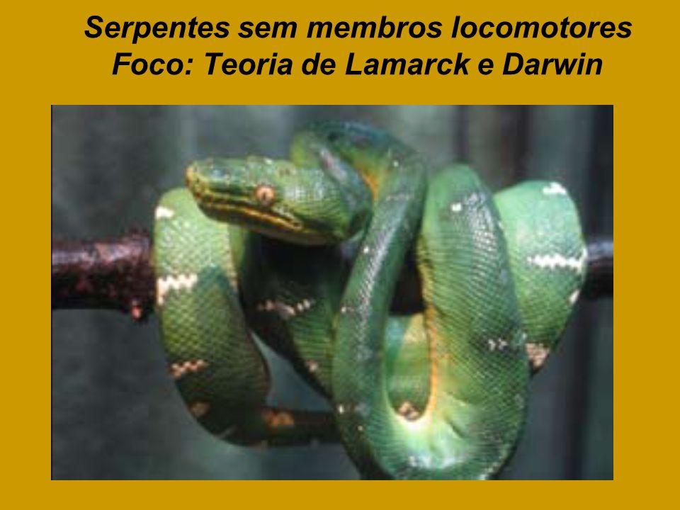 Serpentes sem membros locomotores Foco: Teoria de Lamarck e Darwin