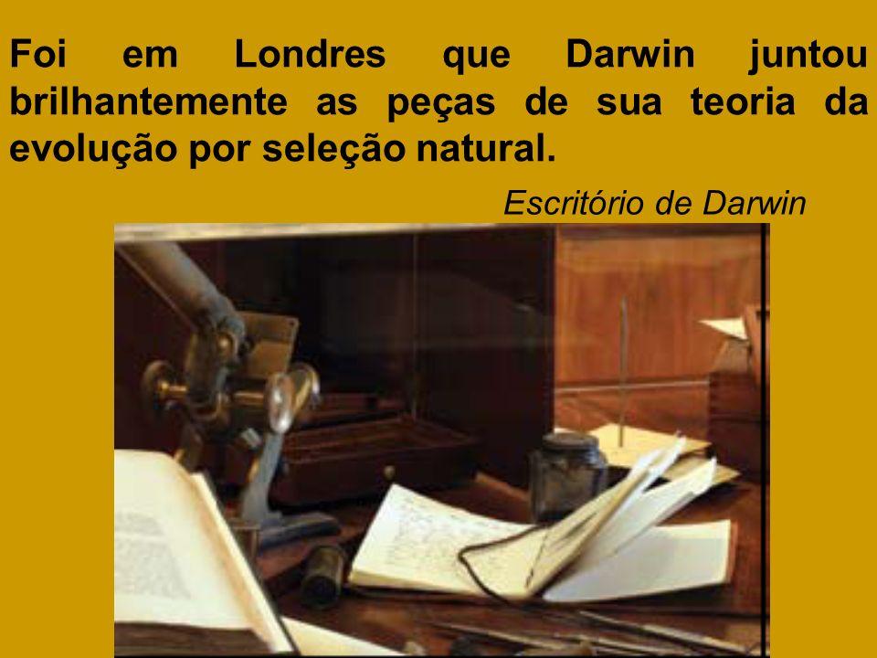 Foi em Londres que Darwin juntou brilhantemente as peças de sua teoria da evolução por seleção natural.