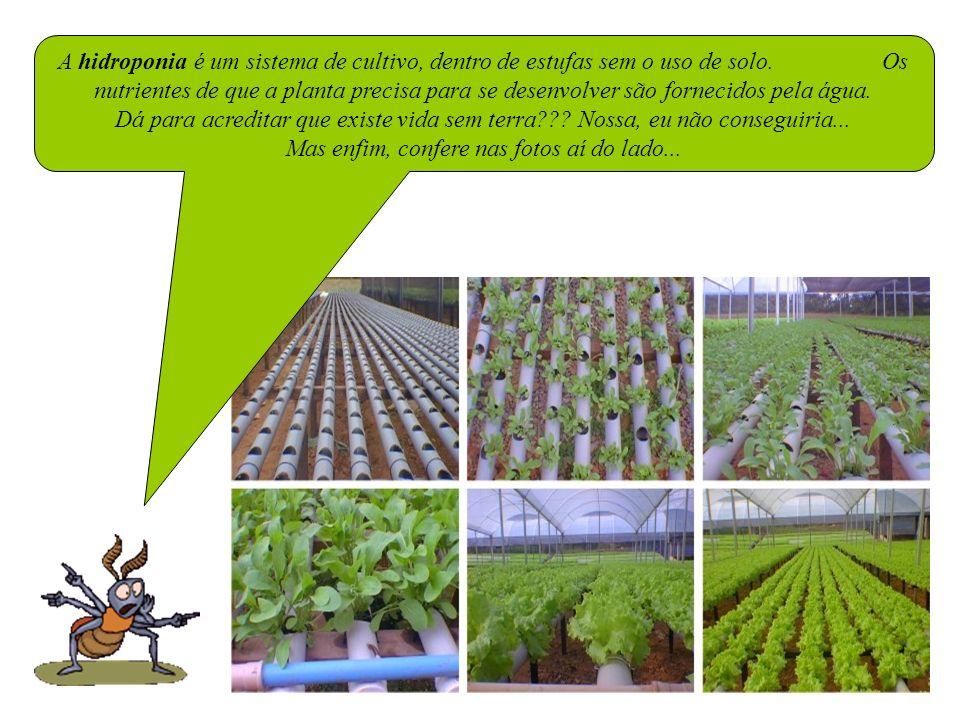 A hidroponia é um sistema de cultivo, dentro de estufas sem o uso de solo. Os nutrientes de que a planta precisa para se desenvolver são fornecidos pela água.