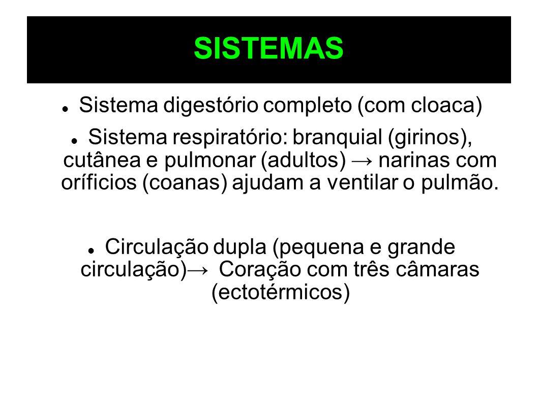 Sistema digestório completo (com cloaca)