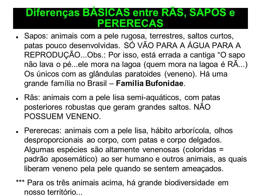 Diferenças BÁSICAS entre RÃS, SAPOS e PERERECAS