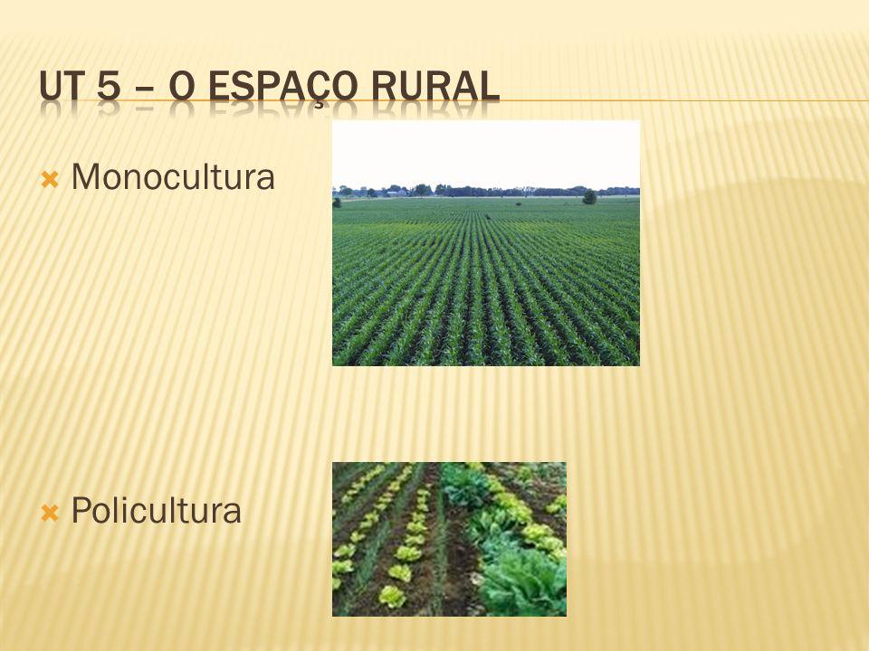 UT 5 – O espaço rural Monocultura Policultura