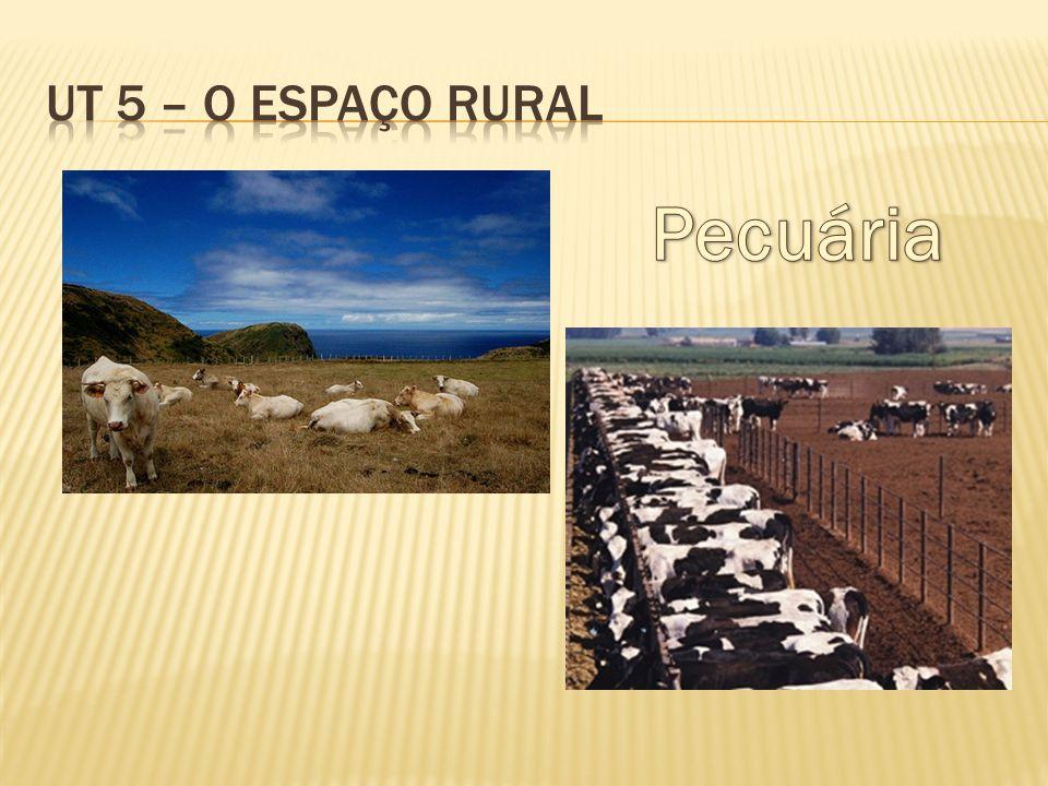 UT 5 – O espaço rural Pecuária