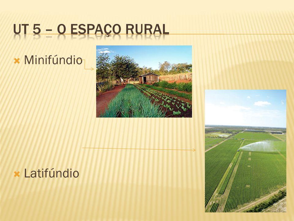 UT 5 – O espaço rural Minifúndio Latifúndio