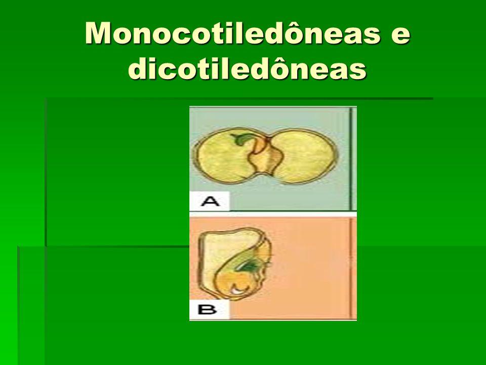 Monocotiledôneas e dicotiledôneas