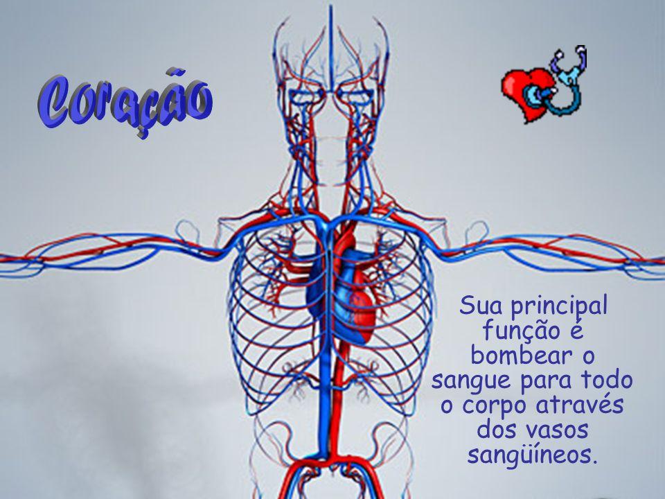 Coração Sua principal função é bombear o sangue para todo o corpo através dos vasos sangüíneos.