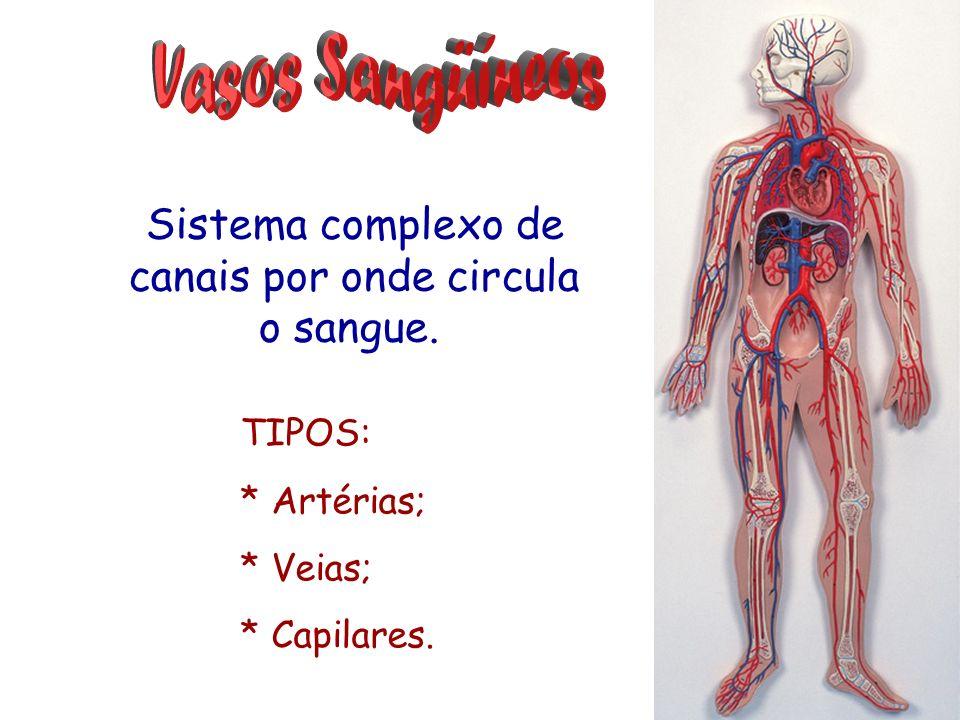 Sistema complexo de canais por onde circula o sangue.