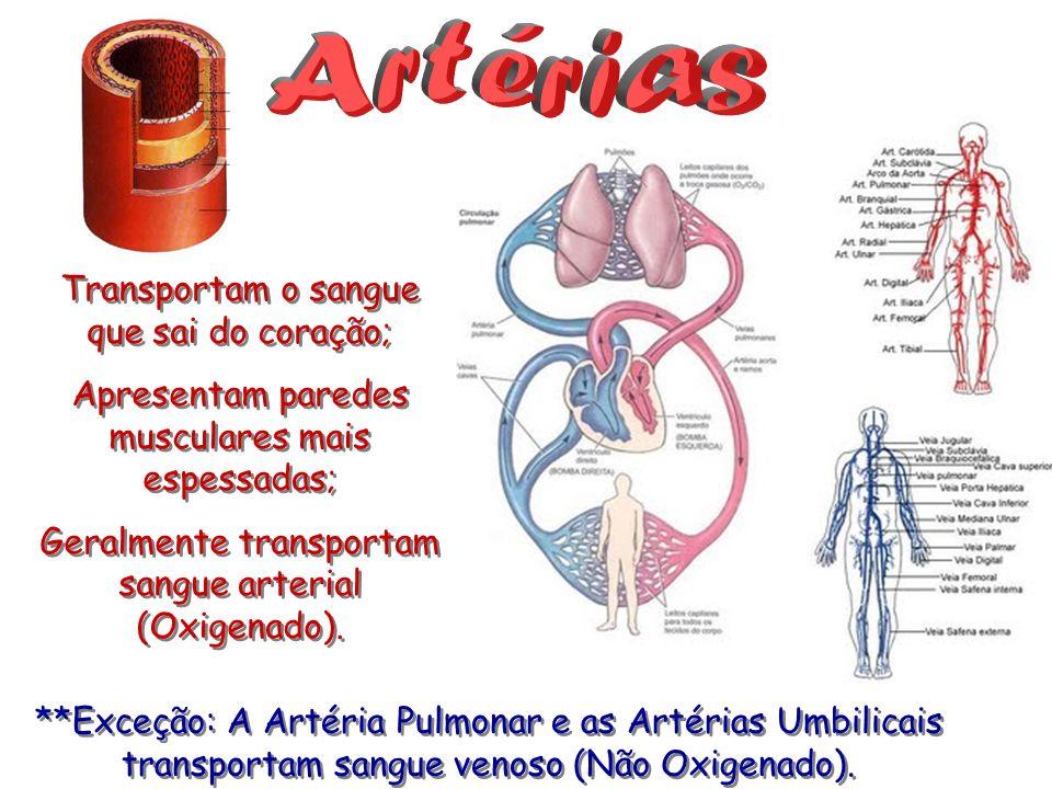 Artérias Transportam o sangue que sai do coração;