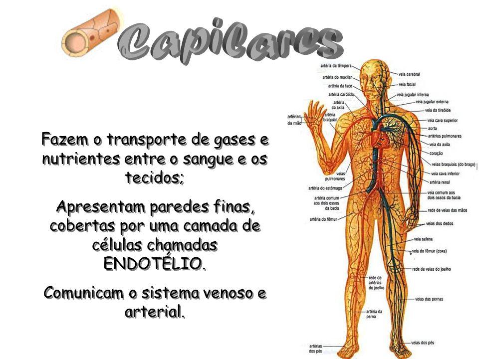 Capilares Fazem o transporte de gases e nutrientes entre o sangue e os tecidos;