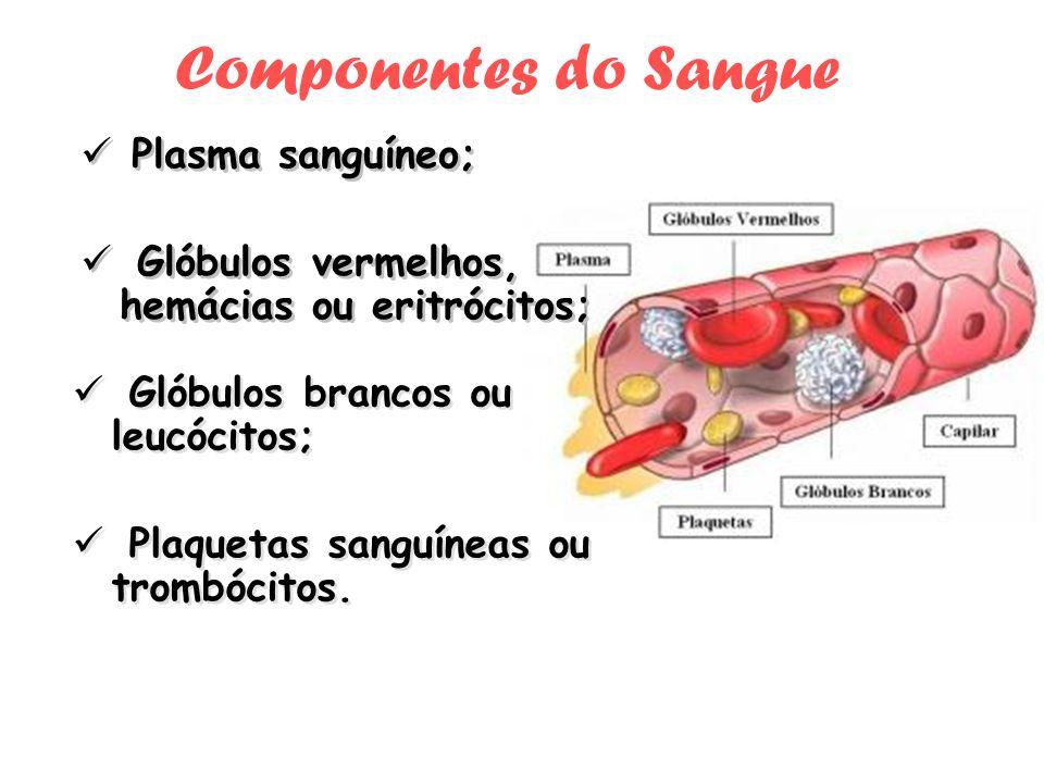 Componentes do Sangue Plasma sanguíneo;