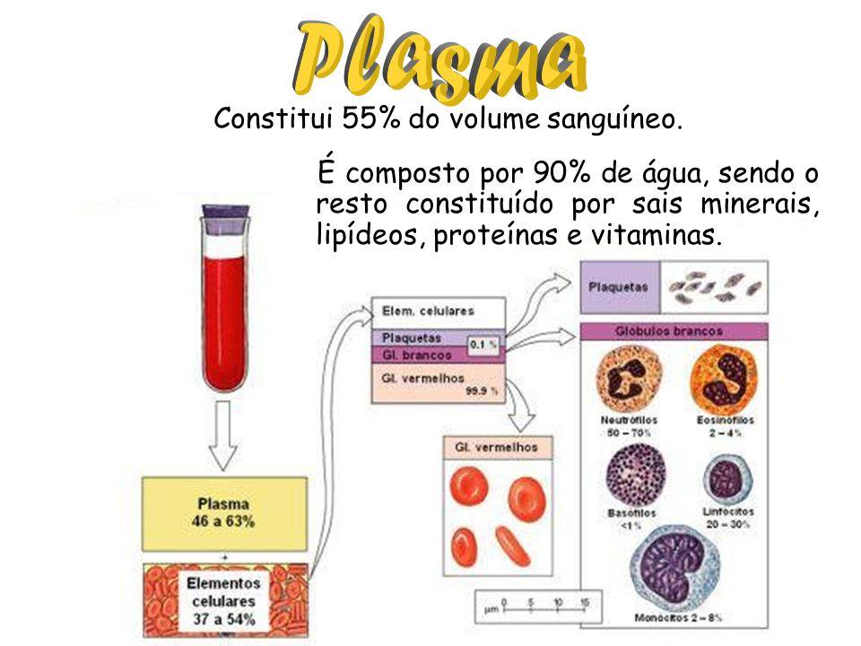 Constitui 55% do volume sanguíneo.