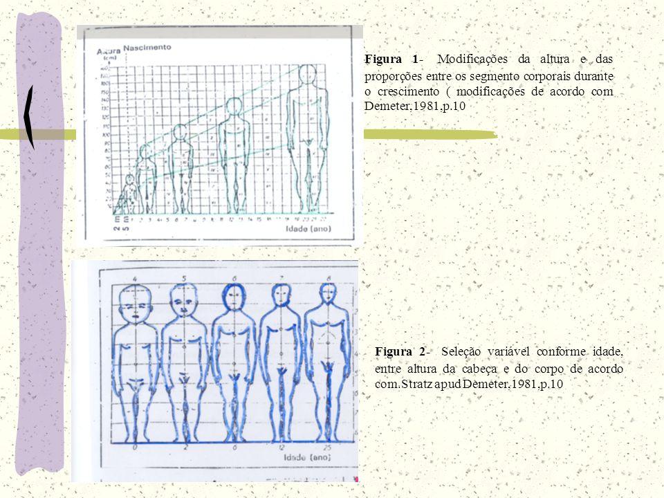 Figura 1- Modificações da altura e das proporções entre os segmento corporais durante o crescimento ( modificações de acordo com Demeter,1981,p.10
