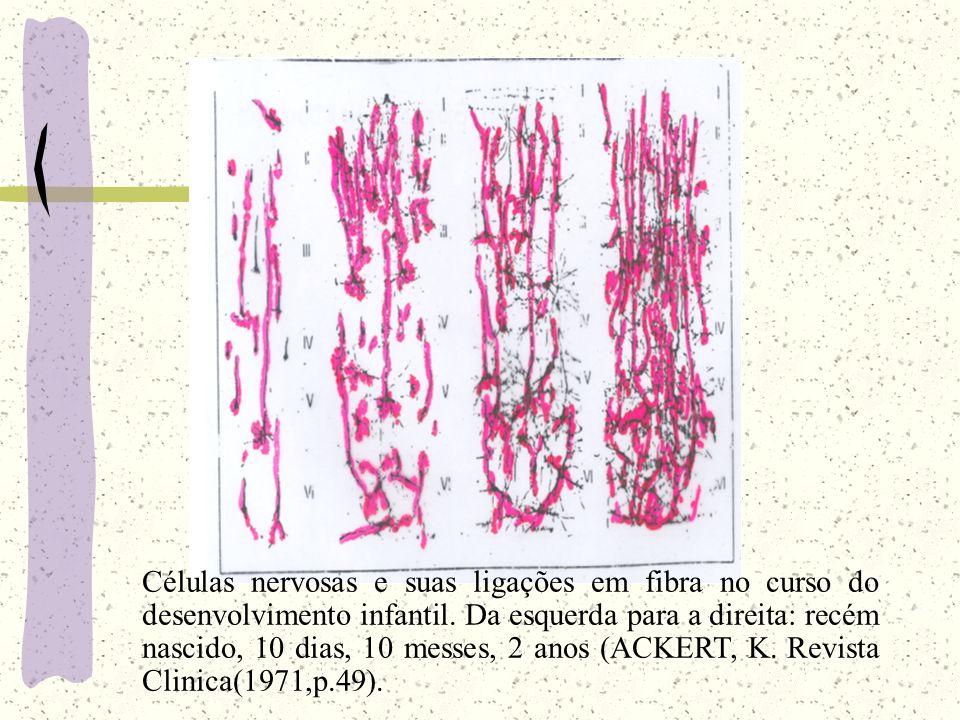 Células nervosas e suas ligações em fibra no curso do desenvolvimento infantil.
