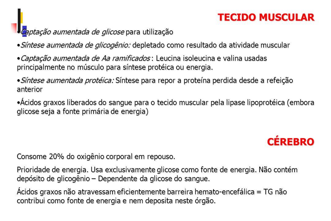TECIDO MUSCULAR CÉREBRO Captação aumentada de glicose para utilização