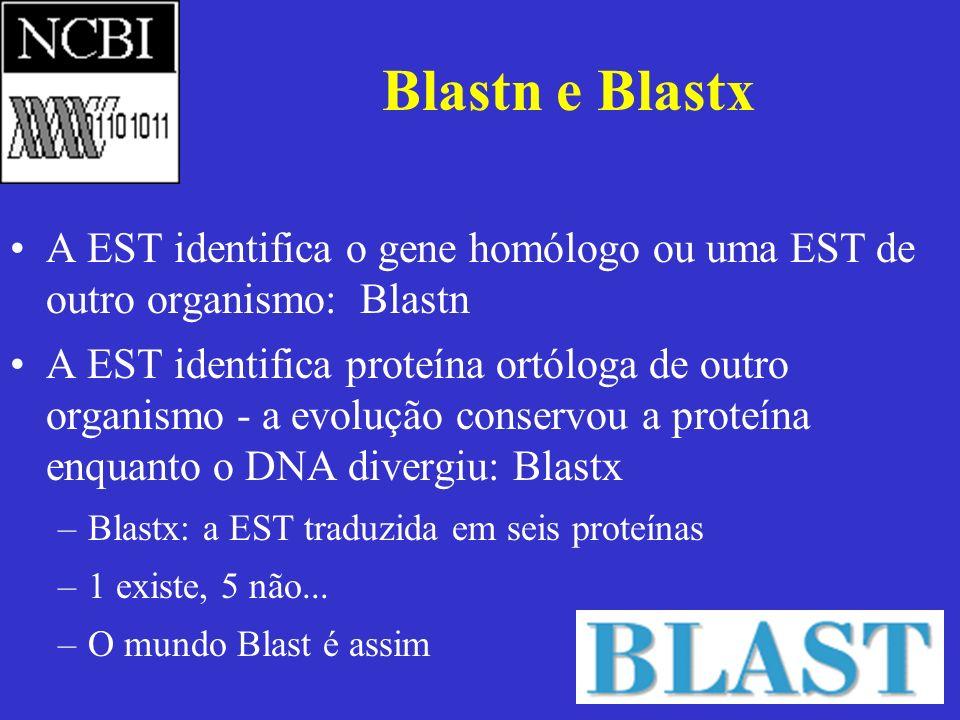 Blastn e BlastxA EST identifica o gene homólogo ou uma EST de outro organismo: Blastn.