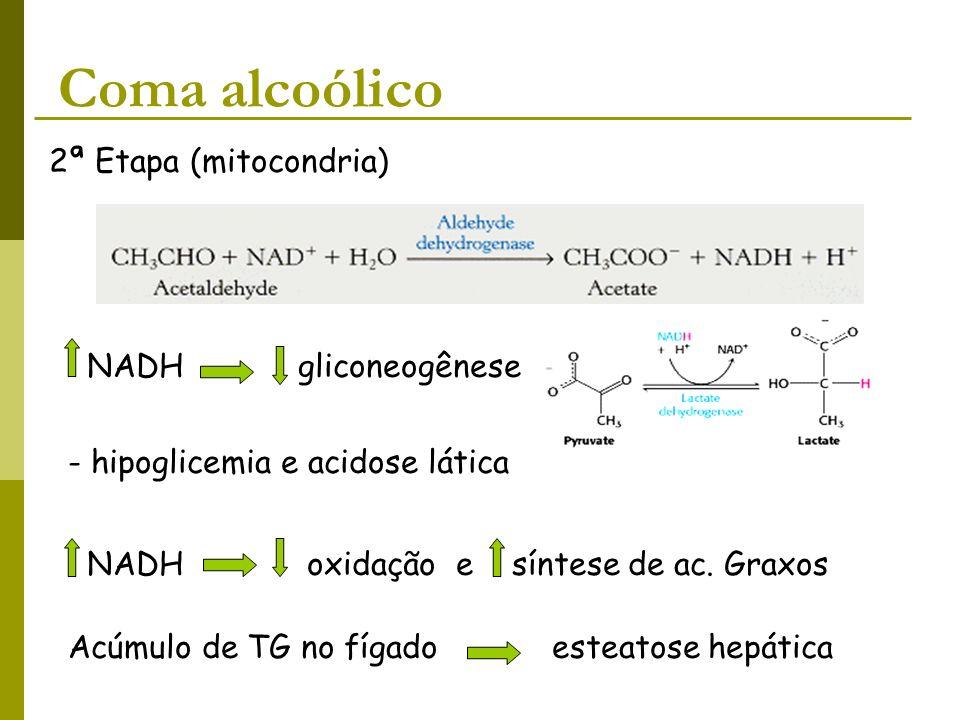 Coma alcoólico 2ª Etapa (mitocondria) NADH gliconeogênese