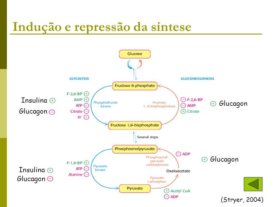 Indução e repressão da síntese