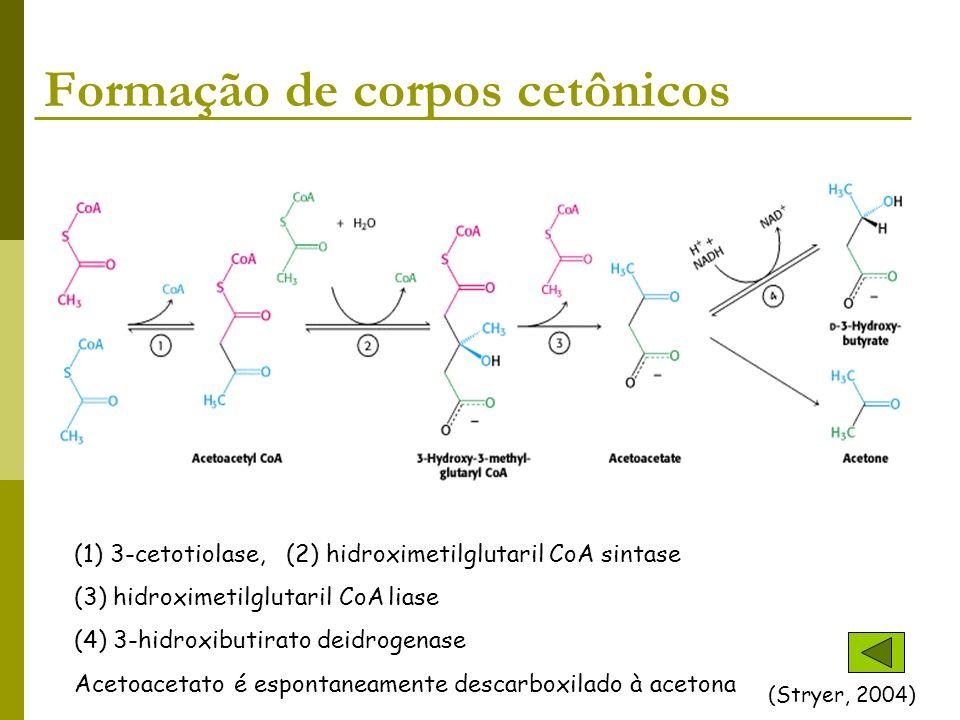 Formação de corpos cetônicos
