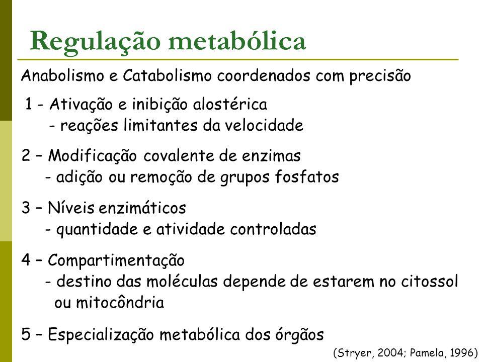 Regulação metabólica Anabolismo e Catabolismo coordenados com precisão