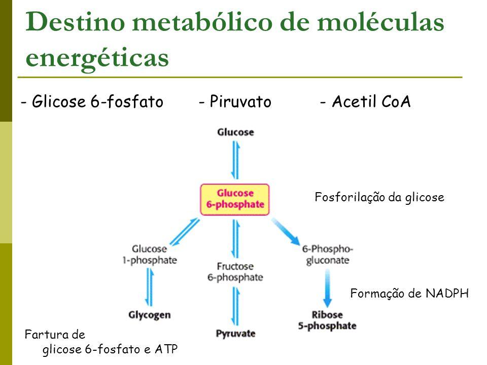 Destino metabólico de moléculas energéticas