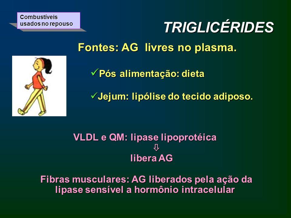 VLDL e QM: lipase lipoprotéica