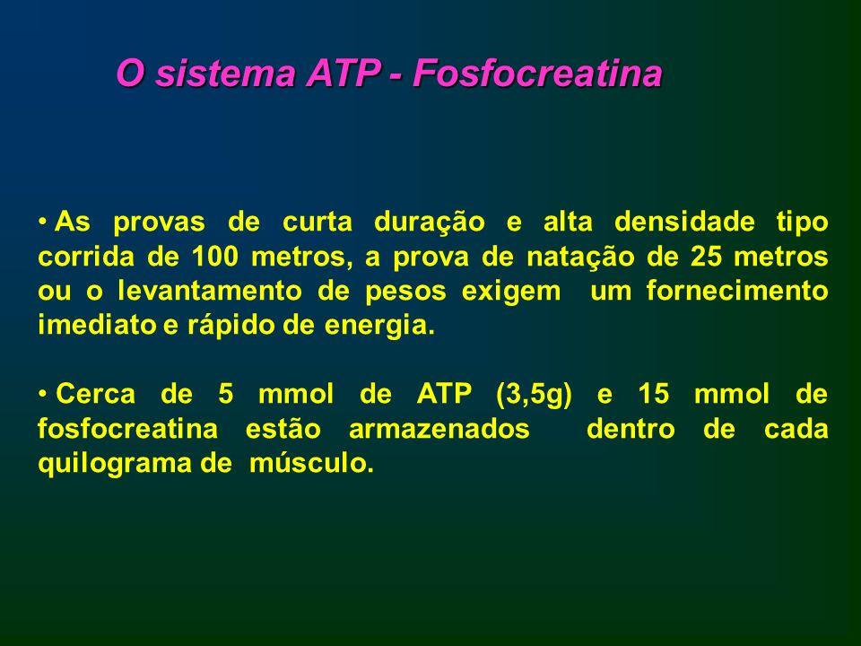 O sistema ATP - Fosfocreatina