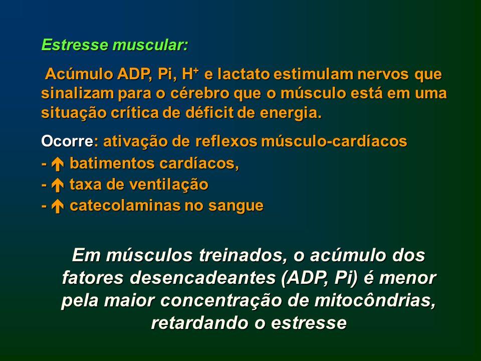 Estresse muscular: