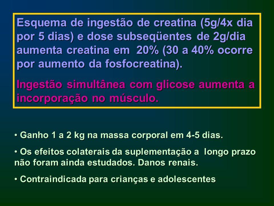 Ingestão simultânea com glicose aumenta a incorporação no músculo.