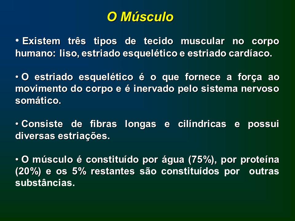 O Músculo Existem três tipos de tecido muscular no corpo humano: liso, estriado esquelético e estriado cardíaco.