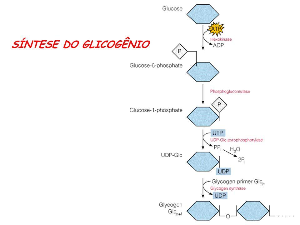 SÍNTESE DO GLICOGÊNIO