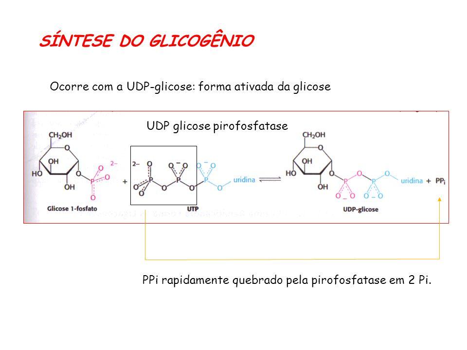 SÍNTESE DO GLICOGÊNIO Ocorre com a UDP-glicose: forma ativada da glicose. UDP glicose pirofosfatase.