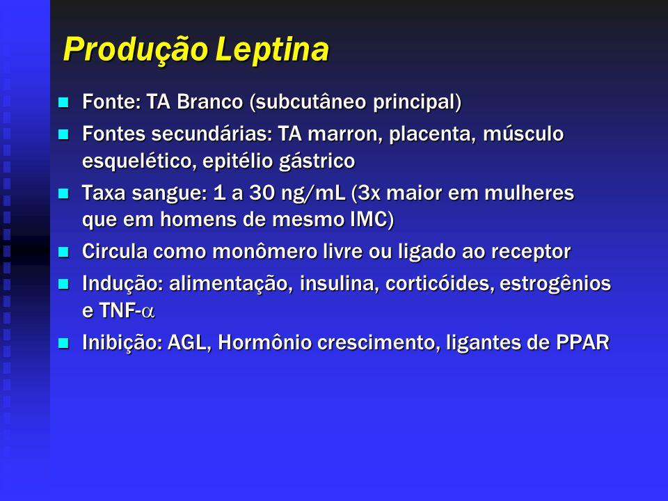 Produção Leptina Fonte: TA Branco (subcutâneo principal)