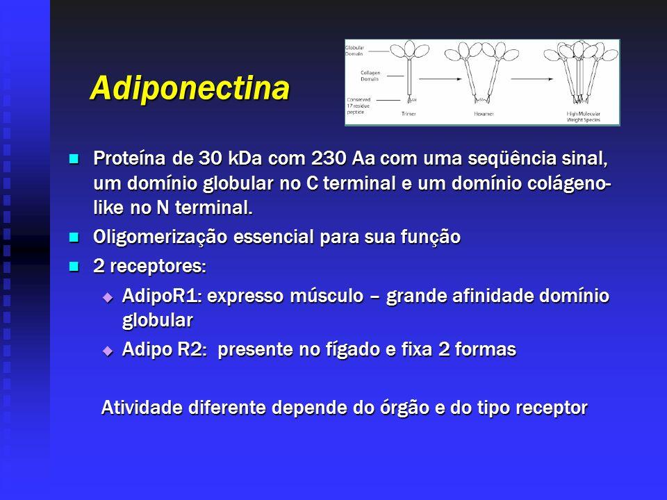 Adiponectina Proteína de 30 kDa com 230 Aa com uma seqüência sinal, um domínio globular no C terminal e um domínio colágeno-like no N terminal.