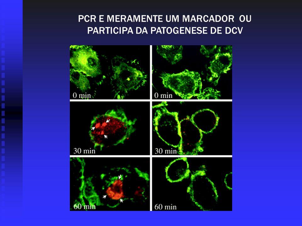 PCR E MERAMENTE UM MARCADOR OU PARTICIPA DA PATOGENESE DE DCV