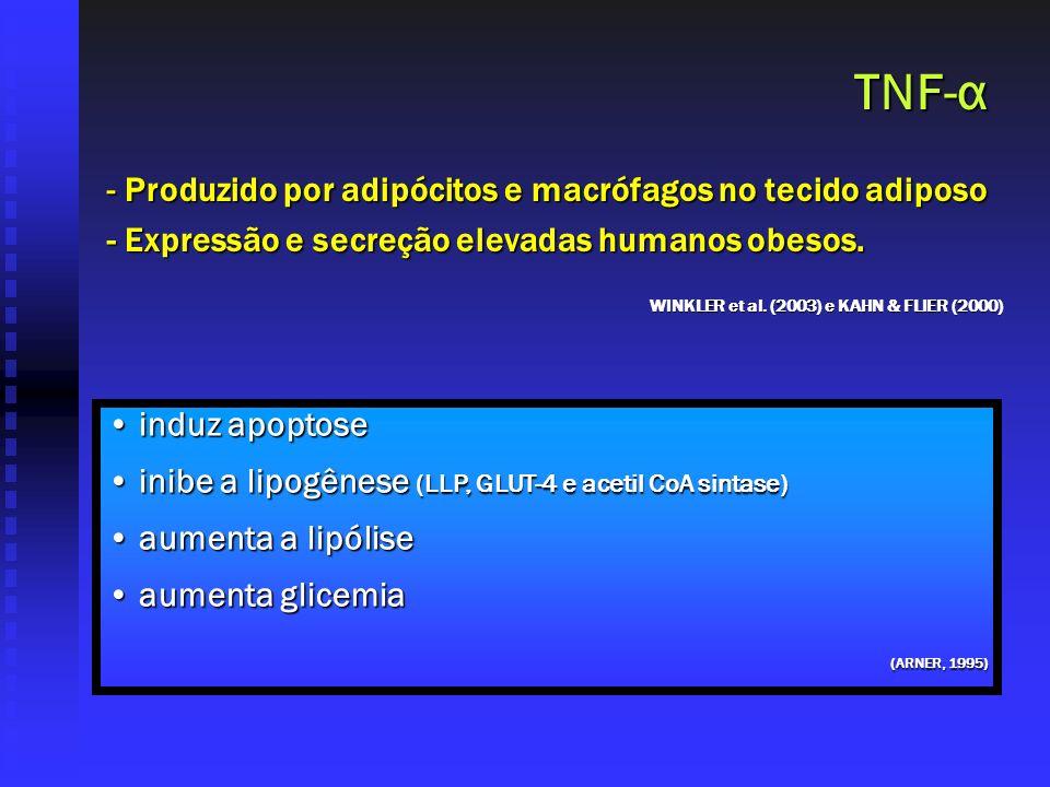 TNF-α Produzido por adipócitos e macrófagos no tecido adiposo