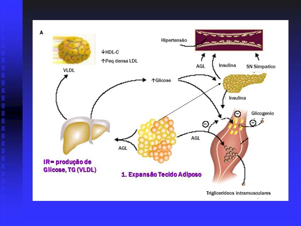 1. Expansão Tecido Adiposo IR= produção de Glicose, TG (VLDL)
