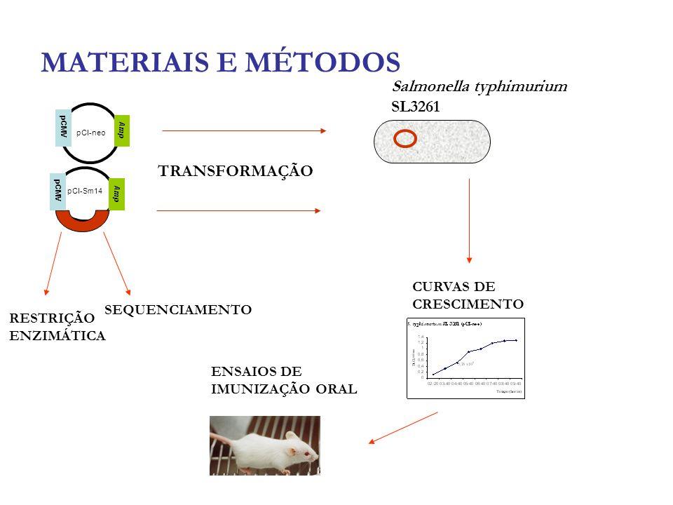 MATERIAIS E MÉTODOS Salmonella typhimurium SL3261 TRANSFORMAÇÃO