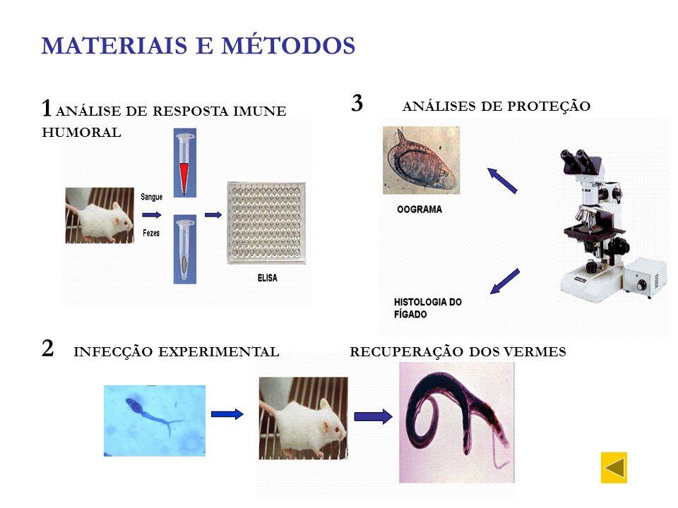 MATERIAIS E MÉTODOS 3 ANÁLISES DE PROTEÇÃO. 1 ANÁLISE DE RESPOSTA IMUNE HUMORAL.