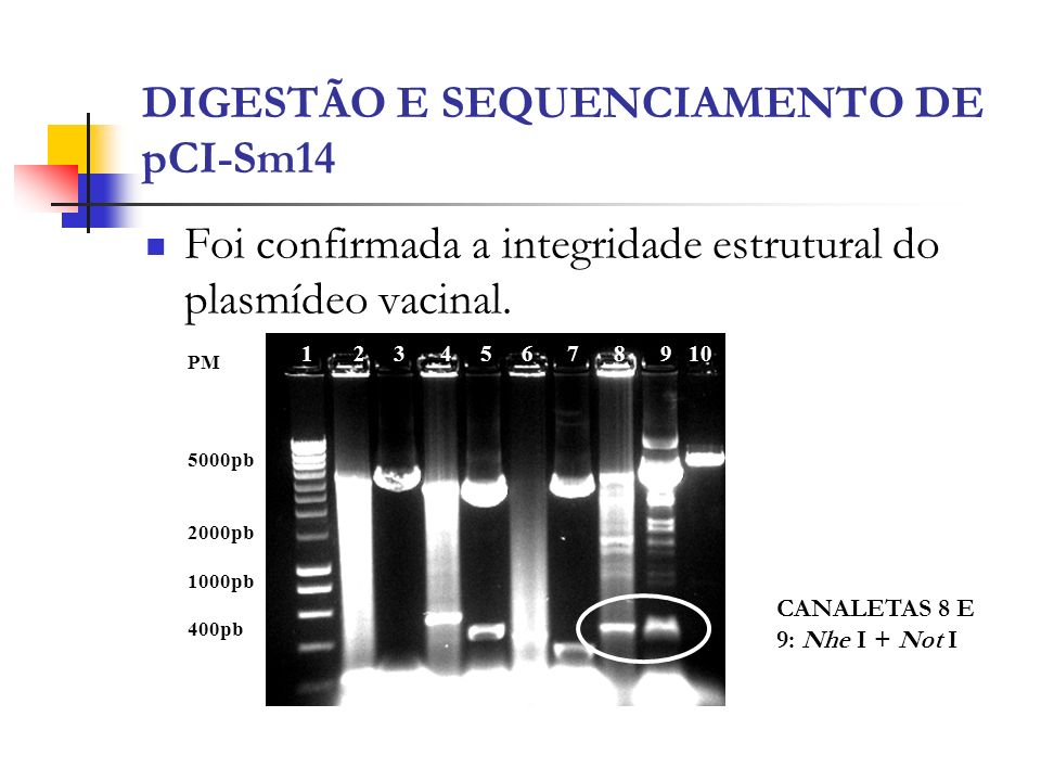 DIGESTÃO E SEQUENCIAMENTO DE pCI-Sm14