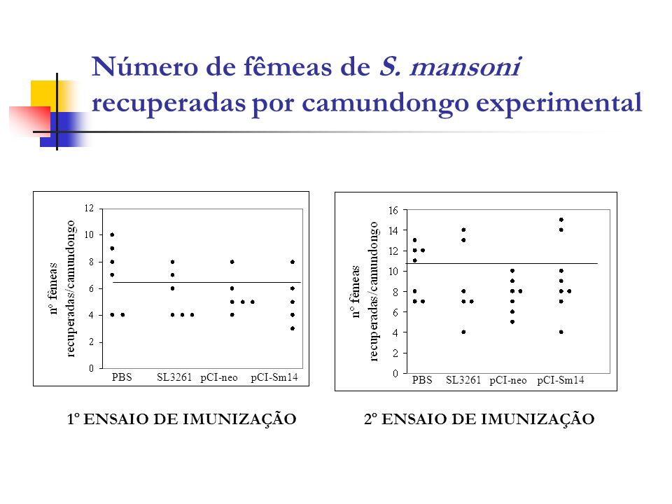 Número de fêmeas de S. mansoni recuperadas por camundongo experimental