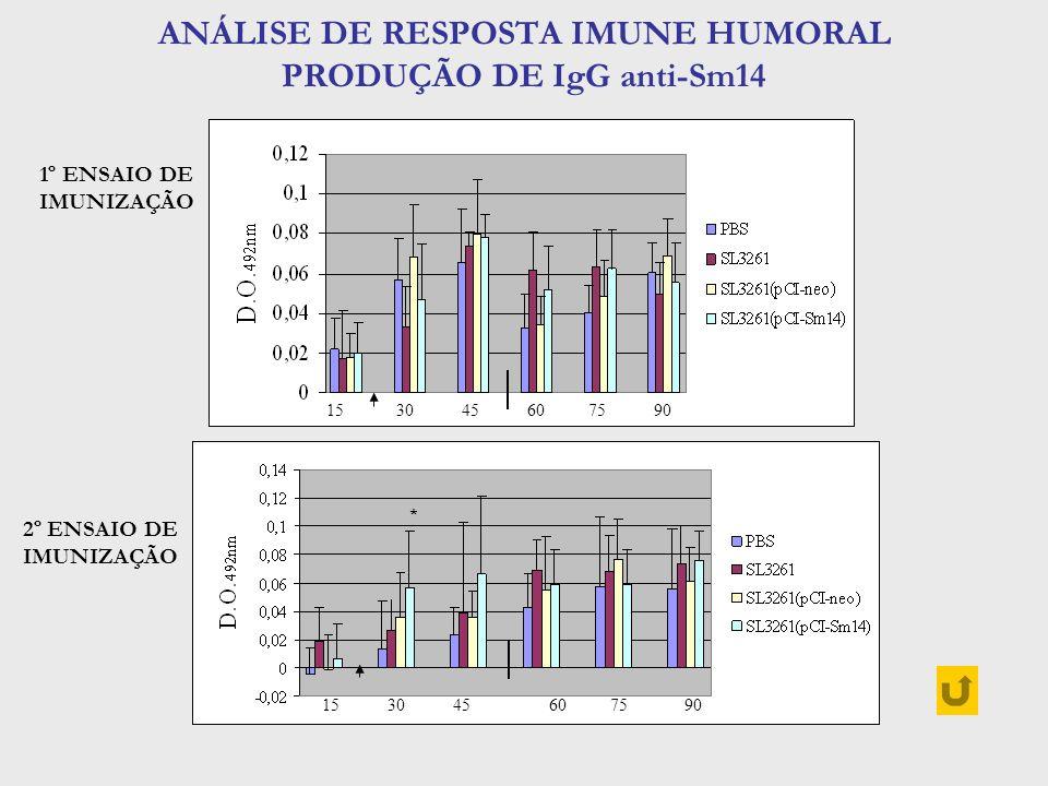 ANÁLISE DE RESPOSTA IMUNE HUMORAL PRODUÇÃO DE IgG anti-Sm14