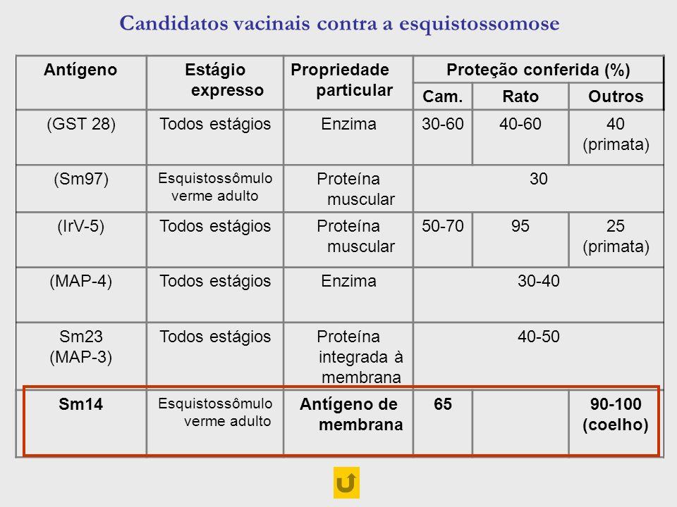 Candidatos vacinais contra a esquistossomose